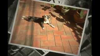 Jean Cloude tenta amansar bulldog que fica bravo ao passear 1/2