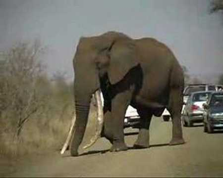 """DUKE"", Krugerpark's biggest Elephant - YouTube"
