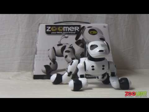 Zoomer Robot Dog Hands On Review Zoolert Phim Video Clip