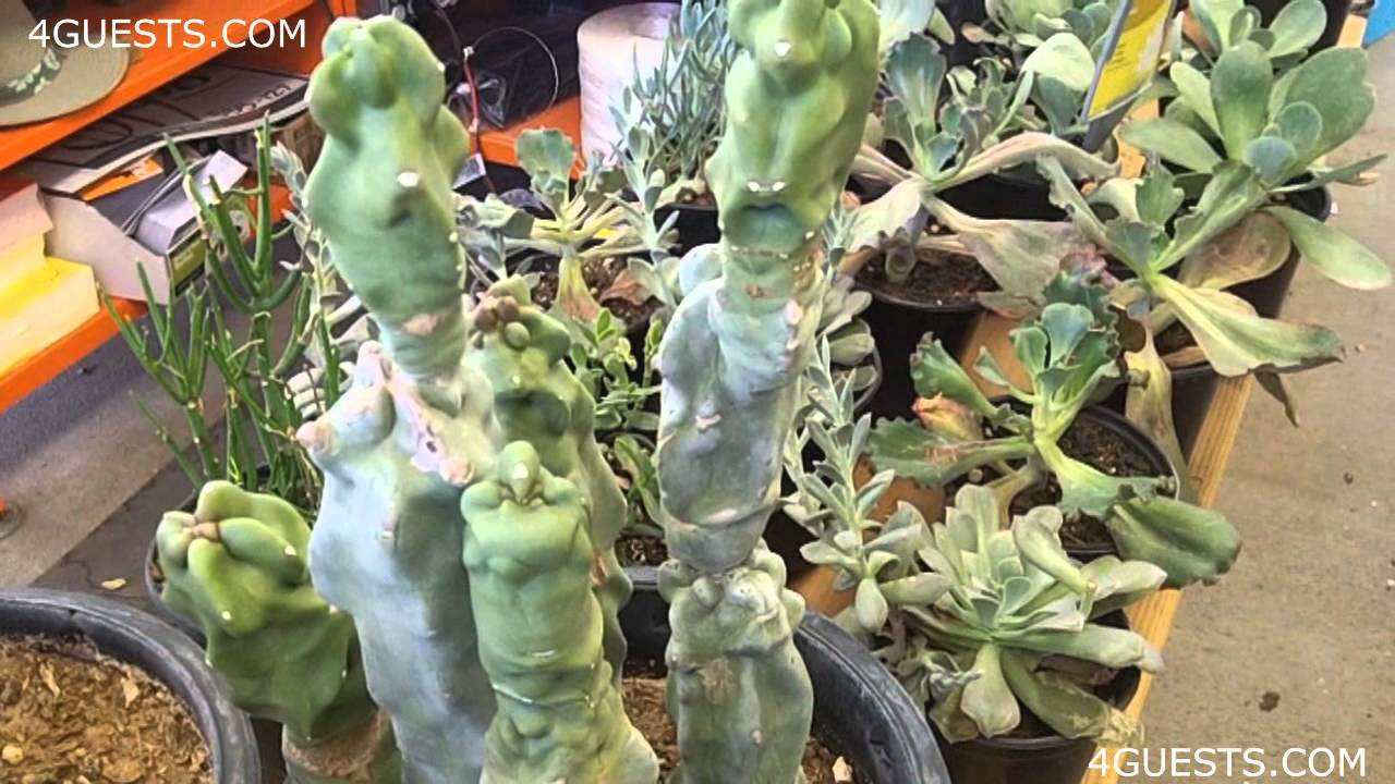 CACTUS PLANTS, GARDEN CENTER AT HOME DEPOT - YouTube