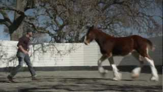 2013 Official Super Bowl Commercials ( Budweiser The