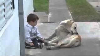 El video mas tierno: Labrador le hace cariño a Pequeño amo