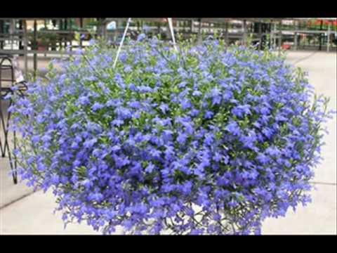 Cestas de flores colgantes youtube for Plantas colgantes exterior