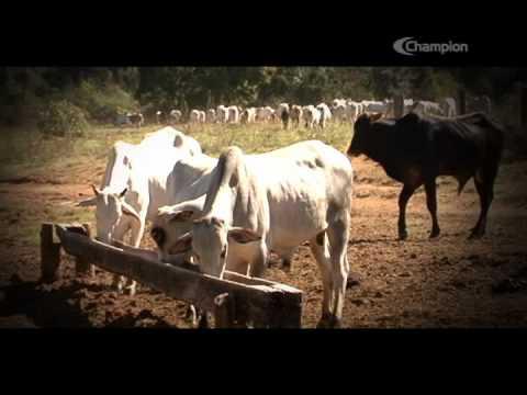 Depoimento - Gerônimo Franco (DIFLY)