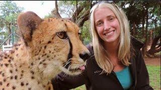 Playing With a Three Legged Cheetah
