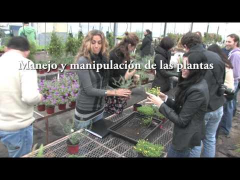 Curso intensivo de Jardines Verticales y Ecosistemas Verticales en Argentina