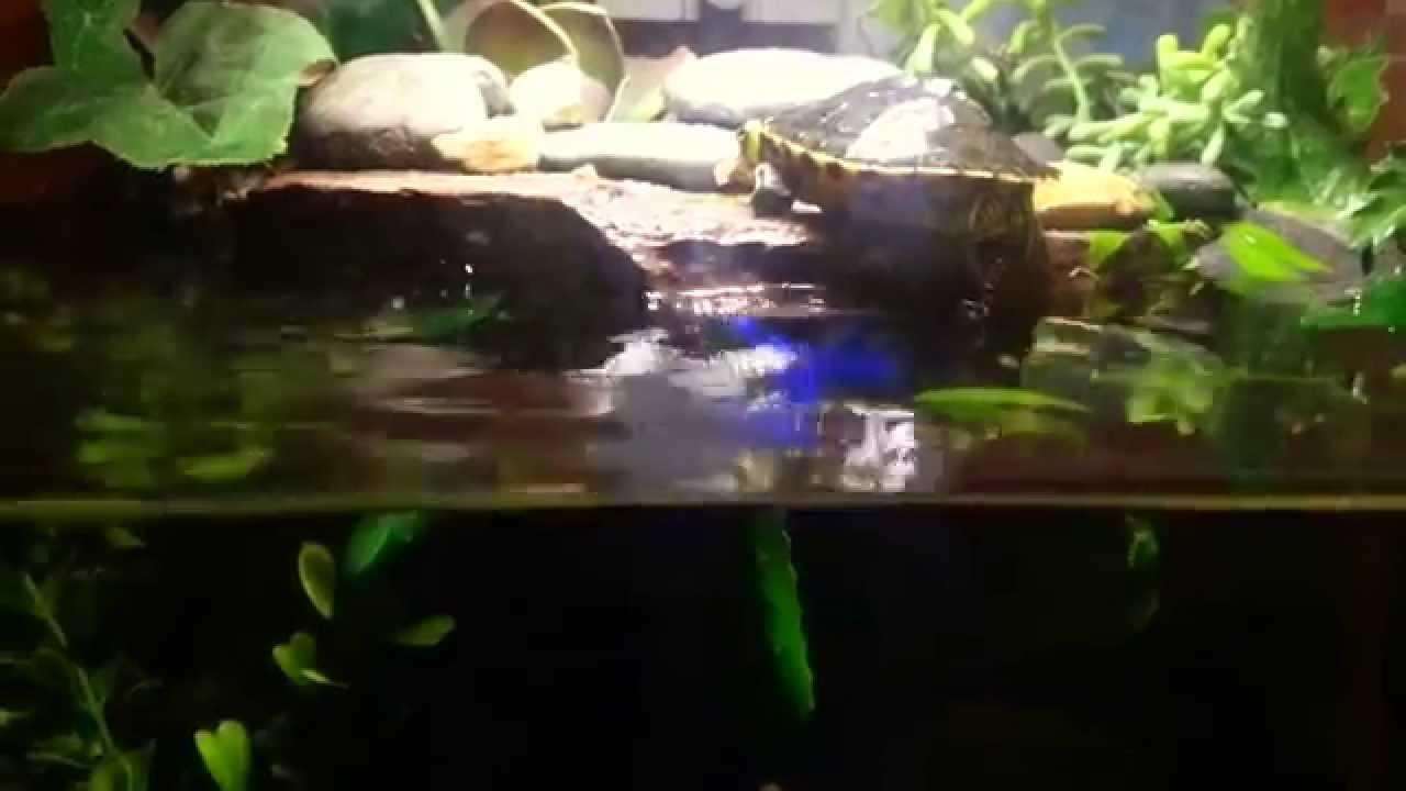 Nano aquarium with little turtle - YouTube