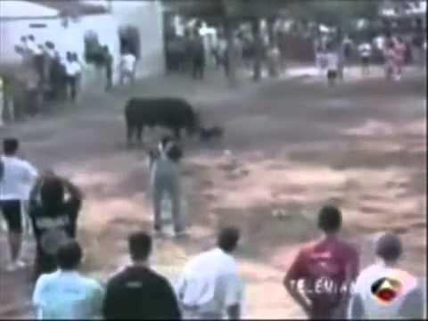 Những trận chiến của động vật hoang dã. 2.FLV