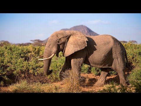 Protecting Africa's elephants: Discover Samburu with Save the Elephants & Google Maps
