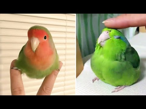 Baby Animals 🔴 Funny Parrots and Cute Birds Compilation (2019) Loros Adorables Recopilación #2