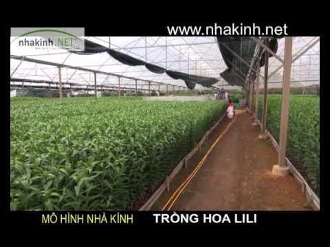 Nhà kính trồng hoa Lili, Nhà kính nông nghiệp công nghệ cao