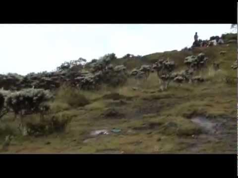 Gunung Gede Pangrango National Park P2