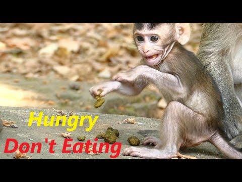 Poor Baby Dustin Hungry Try Eating Stool | Janet Screaming Feeding Milk Jane Bite | Monkey Crying