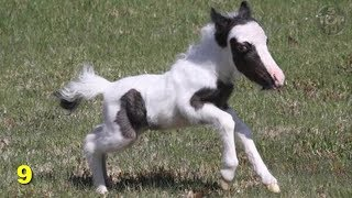 Top 15 Smallest Animals In The World - Interesting facts about animals