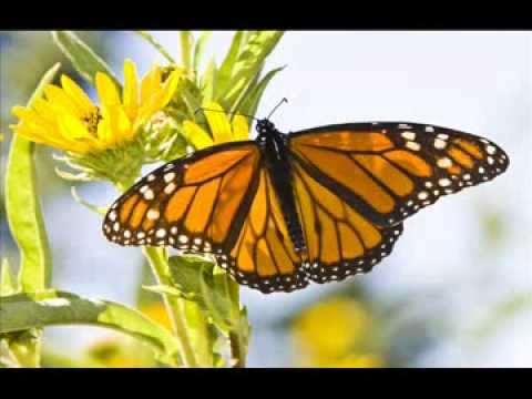 Monarch MIgration Through Oklahoma 2013
