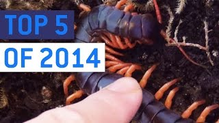 Top 5 So Much Nope Videos of 2014    JukinVideo Top Five