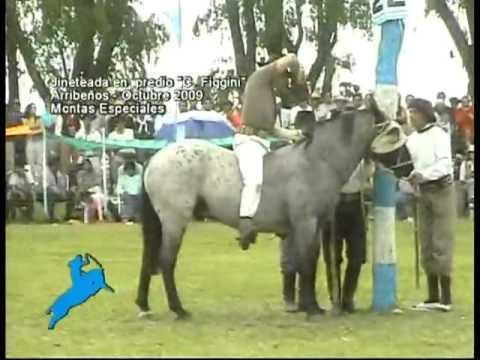 Montas Especiales en la Jineteada en el Predio Carlos Figgini, Arribeños (2009)