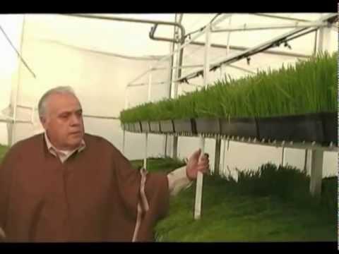 Primer vivero de Forraje Verde Hidropónico en Argentina