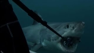 サメにカメラを噛まれる