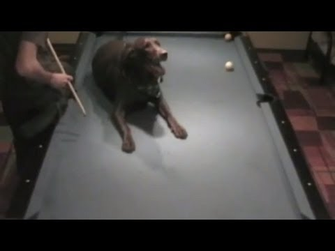 Pool Trick Shots Phenom