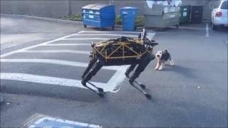Истории робота-собаки Озвучка Google Внимание, мат!