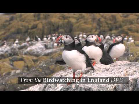 Birdwatching in England