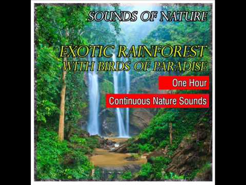 Exotic Tropical Rainforest with Birds of Paradise