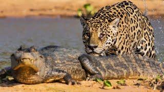 Animales letales de Sudamérica
