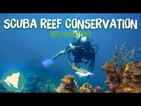 GIVE Caribbean Reef Conservation Add-on