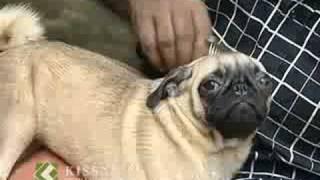Dog keeping: പട്ടി വളര്ത്തല് : Success story view on youtube.com tube online.