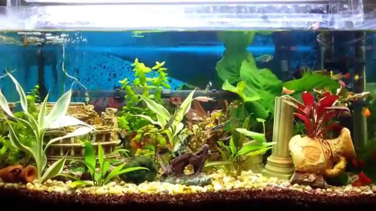 Il mio primo acquario di casa patea youtube - Acquario in casa ...
