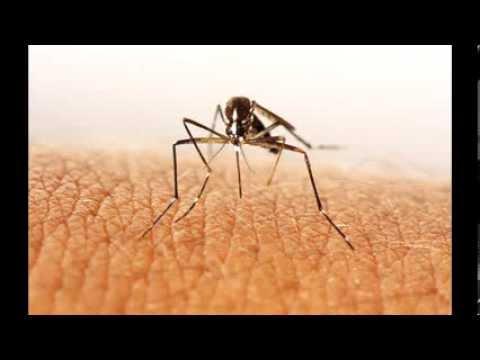 3 remedios caseros para ahuyentar plagas de cucarachas - Exterminar hormigas en casa ...