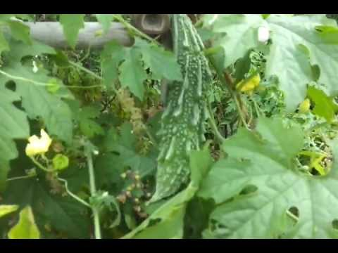 Growing vegetables in containers or pots on a terrace for Terrace vegetable garden ideas in tamil