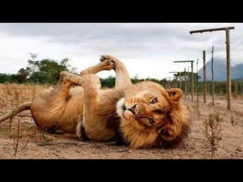 Los Videos De Risa De Animales Más Chistosos Del Mundo ¡PARA CAGARSE DE LA RISA! 2016 ✔