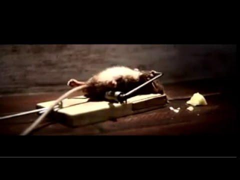 Ingilterenin en maraqli reklam videosu