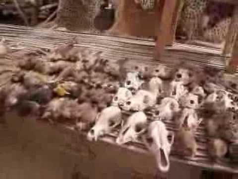 Fetish Voodoo market, Lome, Togo Fetish Scary Creepy dead Animals scarification