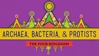 CrashCourse Biology: Archaea, Bacteria & Protists