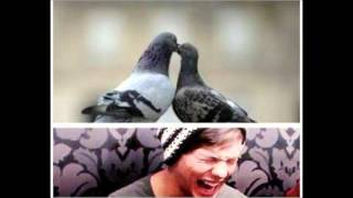 One Direction Funny Pictures Part 2