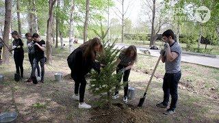 Волна озеленения накрыла Артёмовский городской округ