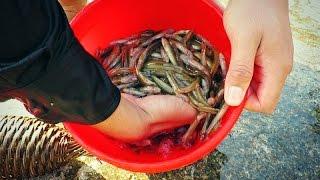 Tuyệt Chiêu Bắt Cá Suối