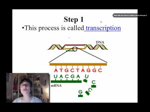 Introduction to Protein Synthesis -vEAp8-nlXxE