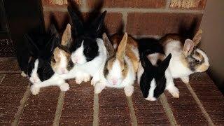 Baby Rabbit Kits! Day 1-36
