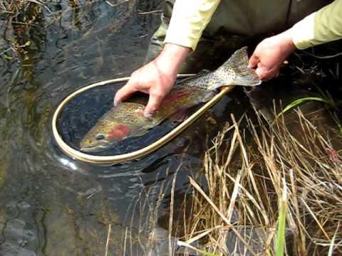 Grand lake trout fishing matt mark guy colorado 024 youtube for Grand lake colorado fishing