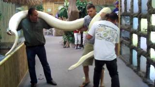 TWINKIE The Monster Snake At The Reptile Zoo