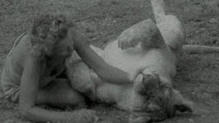 David Attenborough: Getting Close to Elsa the Lioness, 1961