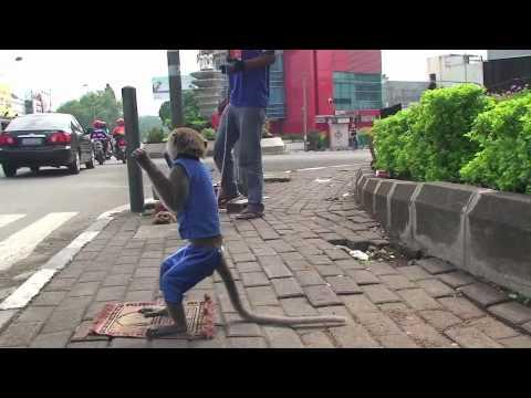 Penghibur Jalanan di Kota Bandung