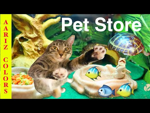 Aariz visiting pet store funny video/Cat, snake, turtle, hamster, birds and fish aquarium.