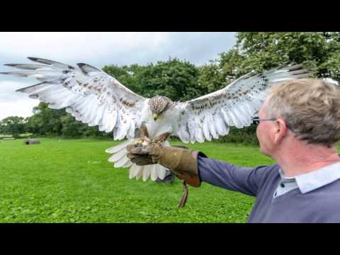 Stockley Farm Birds of Prey Centre Winsford Cheshire