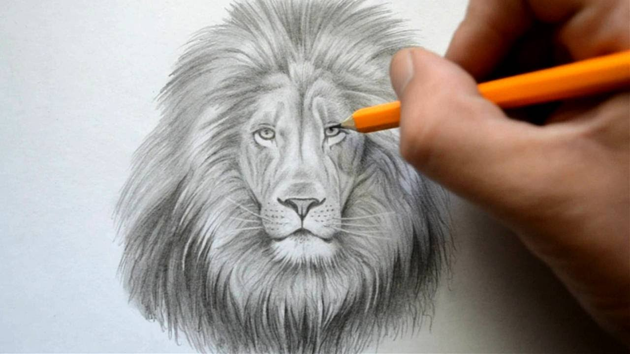 Time Lapse Drawing Of A Lion Youtube