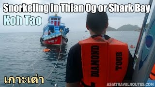 Snorkeling in Thian Og or Shark Bay in Koh Tao
